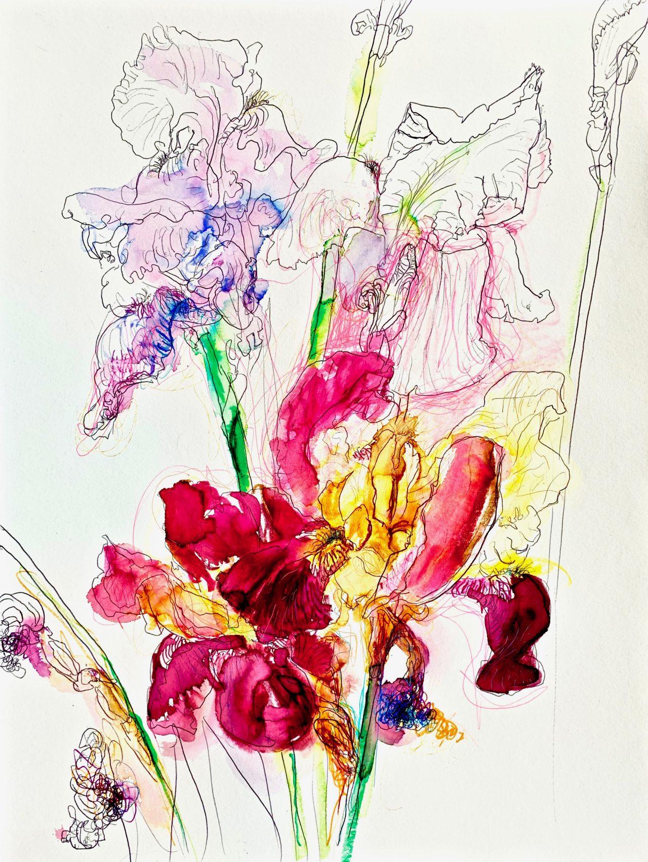 3 Iris, encre sur papier, 42x56cm, 2018